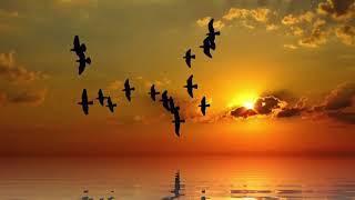 Träume nicht dein Leben, lebe deinen Traum! - MEDITATION zur Verwirklichung deiner Ziele